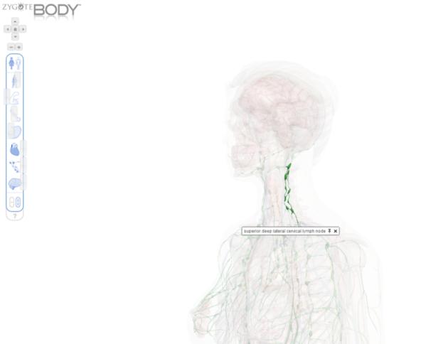 zygote-body-3
